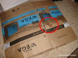 Uit de kartonnen doos steekt een hand. Wiens hand is dat? Klik voor groter/sluiten.