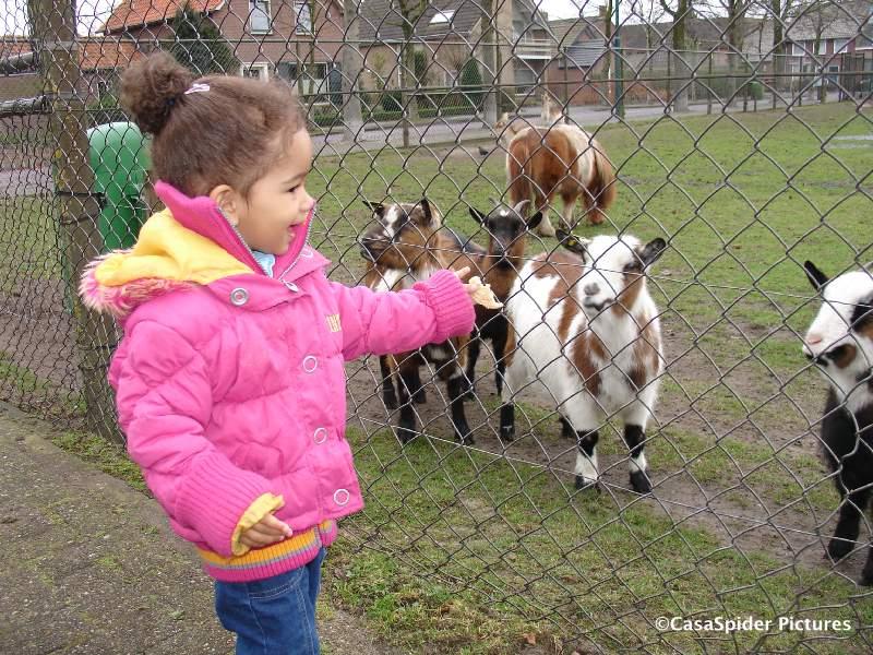 09.03.2008: Diana (1) bij de geitjes aan de Hoeksestraat te Rijen. Klik voor groter.