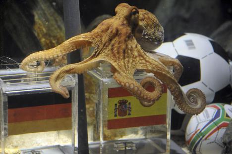 07.07.2010: Voetbal en Bijgeloof gaan hand in hand, de Duitsers geloven massaal in Inktvis Paul. Klik voor groter.