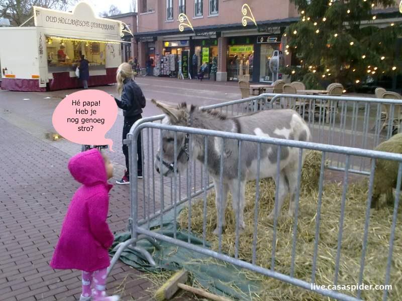 11.12.2010: CasaSpider doet boodschappen met Luchiano (013) en Diana (4), we lopen op het Wilhelminaplein in Rijen en zien een Ezel. Klik voor groter.