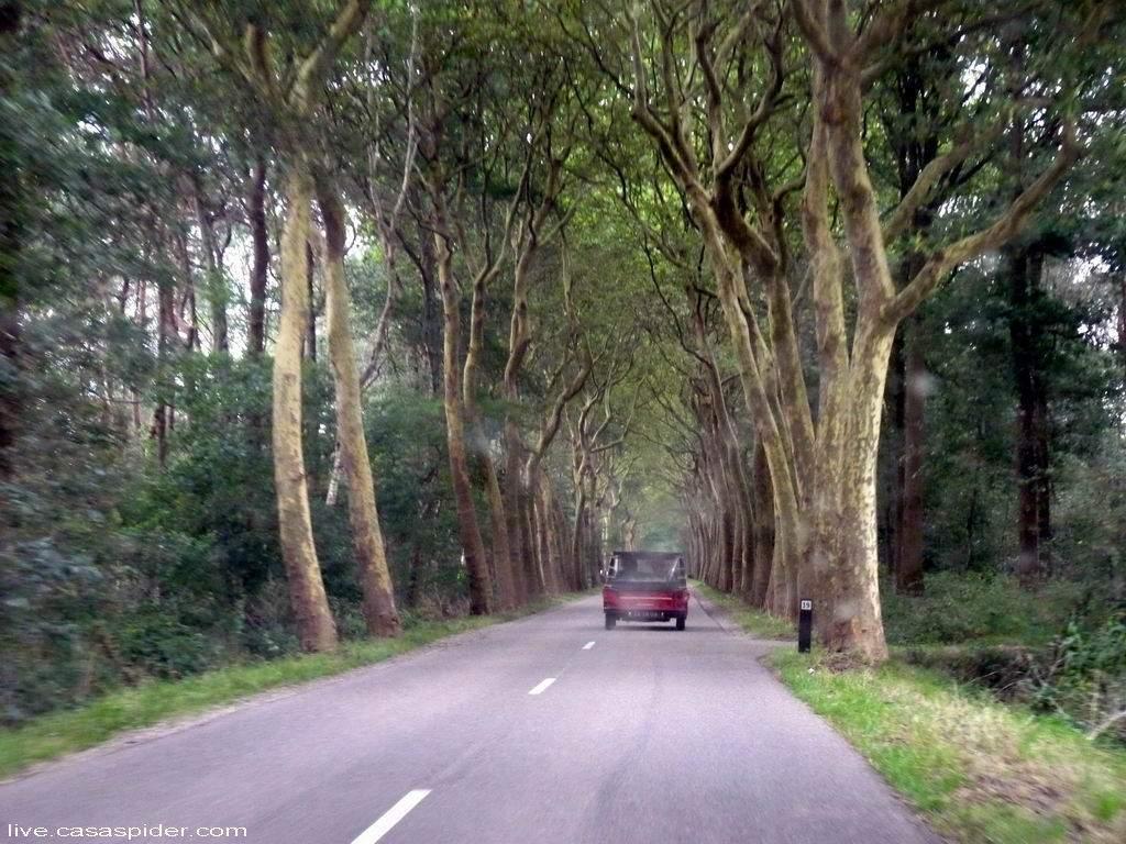 23.09.2011: Onderdeel van de Redwood Relatiedag in Voorthuizen is een safari in jeeps en Mehari's door de Veluwe. Klik voor groter.